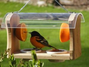 bird-feeders_1De tudo um pouco