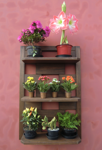 ideias para decorar meu jardim:Jardim-Vertical-Girassol-Nogueira-Prateleiras-de-Parede-Meu-Móvel-de