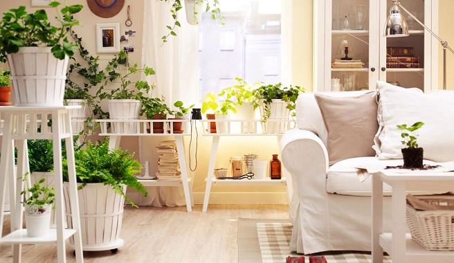 decorar-casa-com-plantas1