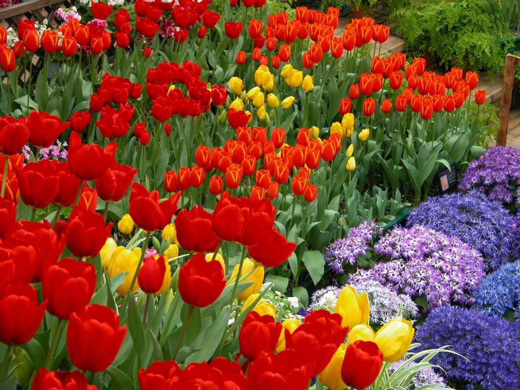 flores e jardins fotos : Lindos Jardins em pequenos Espa?os! - Blog Mix Lar