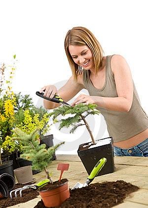 jardinagem-árvore-dos-bonsais-do-aparamento-da-mulher-14460484