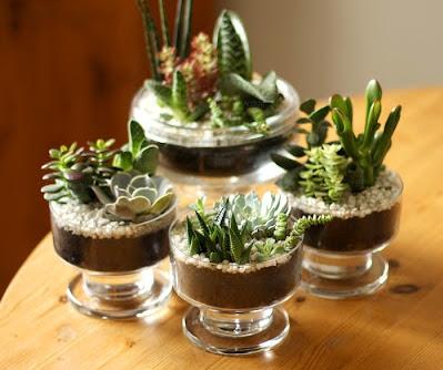 mini-jardim-com-plantinhas-suculentas-15-7886461-135