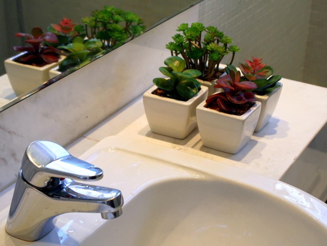 dissemos as suculentas se adaptam a qualquer ambiente. No banheiro  #2957A2 1109 833