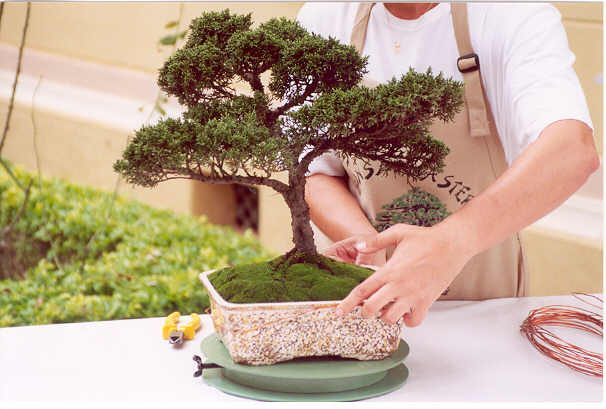arte-tecnica-bonsai