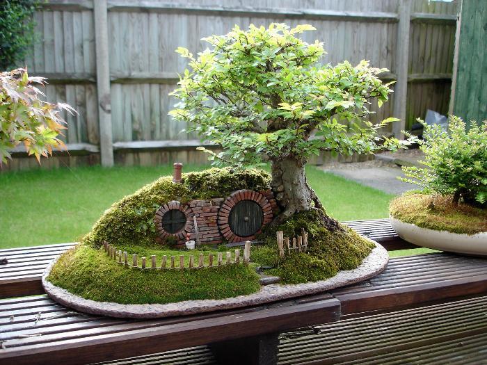 best-bonsai-trees