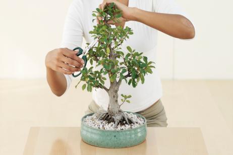 cuidados-basicos-del-bonsai