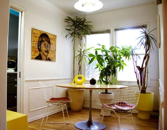 686274-Flores-e-plantas-dentro-de-casa-as-espécies-indicadas-6