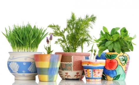 ervas-em-potes_como_plantar_horta_vasos