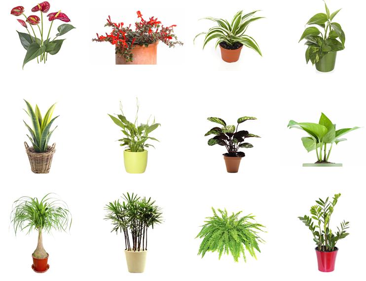 plantas jardim inverno png 742 570 inverno ideias para jardim plantas