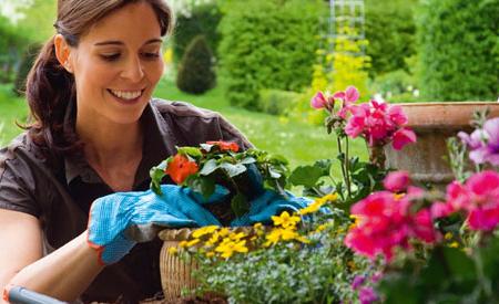 plantas_exterior-3218569