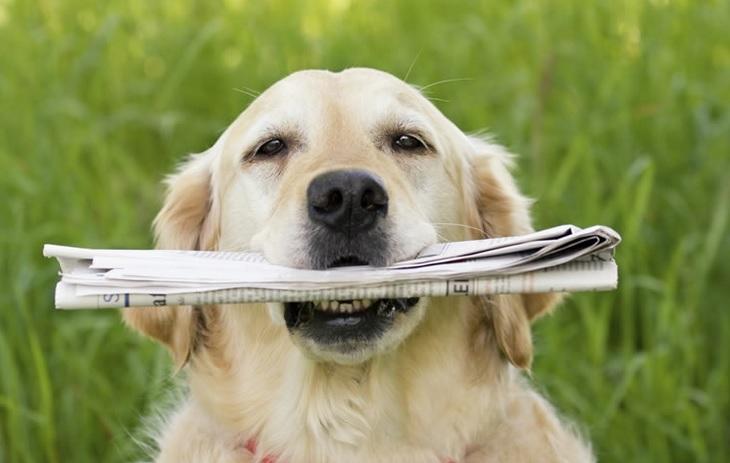 jornal cachorro